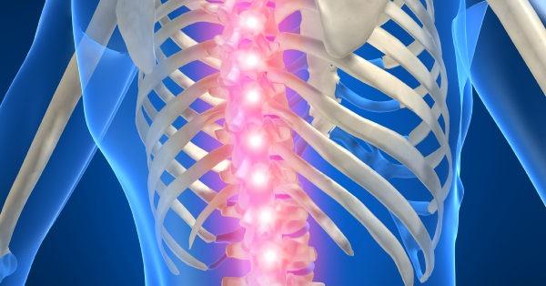 Les adaptations de l'axe crânio-sacré